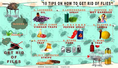 10 tips on how to get rid of flies home remedies