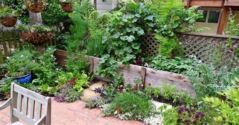 edible backyard plants gallery star apple edible gardensstar apple edible gardens garden design