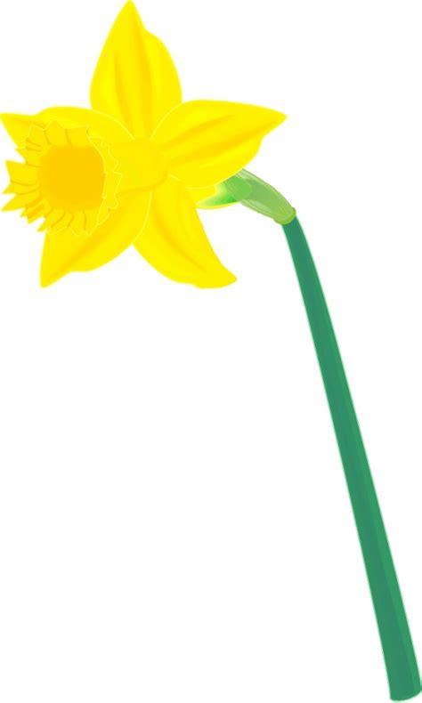 arts clipart daffodil clip cliparts