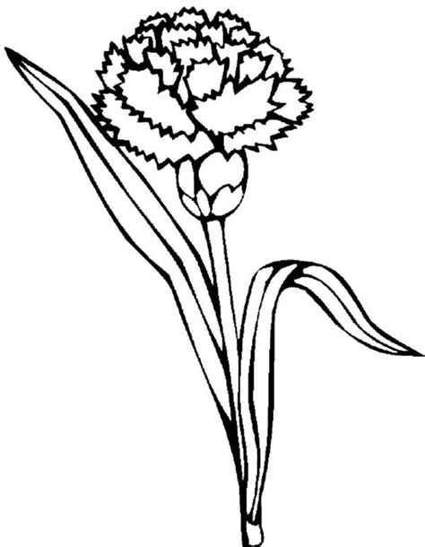 carnation pages coloring pages