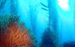 pt loma kelp beds flora