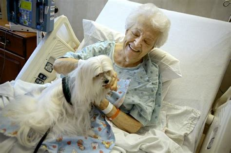 how to your for pet therapy animal assisted therapy how your pets can serve a greater purpose 171 miss a