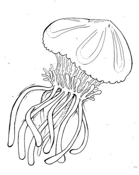 box jellyfish coloring pages jellyfish box jellyfish coloring page jpg