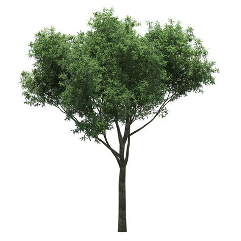 imagenes png de kaneki 园林树木绿树透明png设计图 树木树叶 生物世界 设计图库 昵图网nipic com
