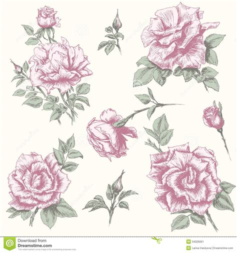 floral pattern hand drawing vintage rose collection stock image image 34026061