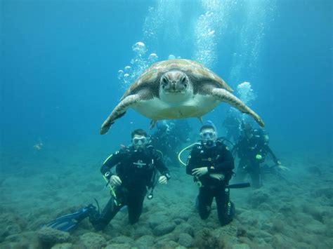 dive a turtles in tenerife just a few padi divemaster