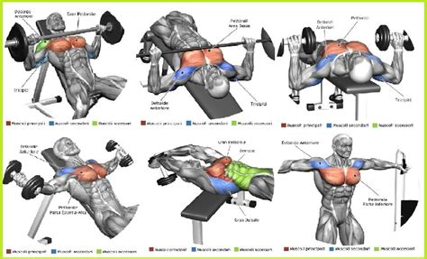 the top 5 chest exercises all bodybuilding