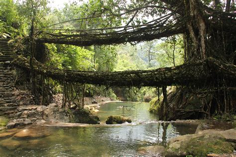 Living Bridges by Fl Class Meghalaya Articles Of Unknown Importance