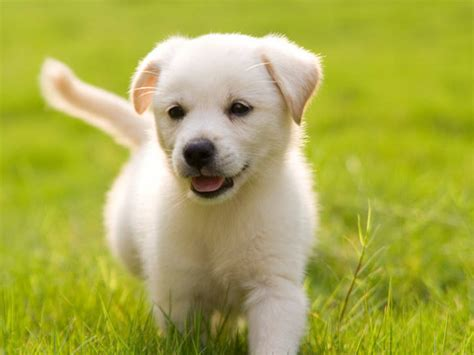 9 in 1 puppy in a time of uncertainty a divided nation searches for puppies trending 12 2 2016