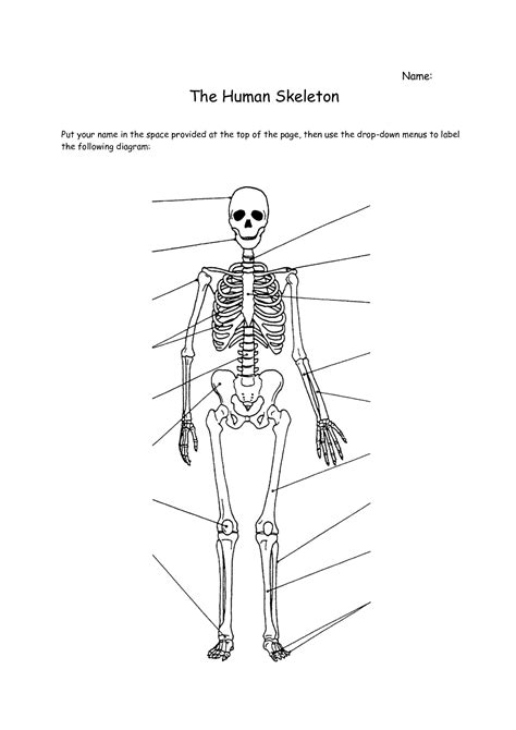 printable label the skeleton skeletal system worksheets plustheapp