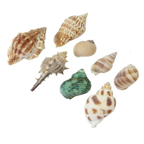 seashell color popular seashell color buy cheap seashell color lots from