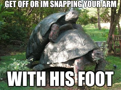 Funny Turtle Memes - funny turtle memes 28 images and they all fall down