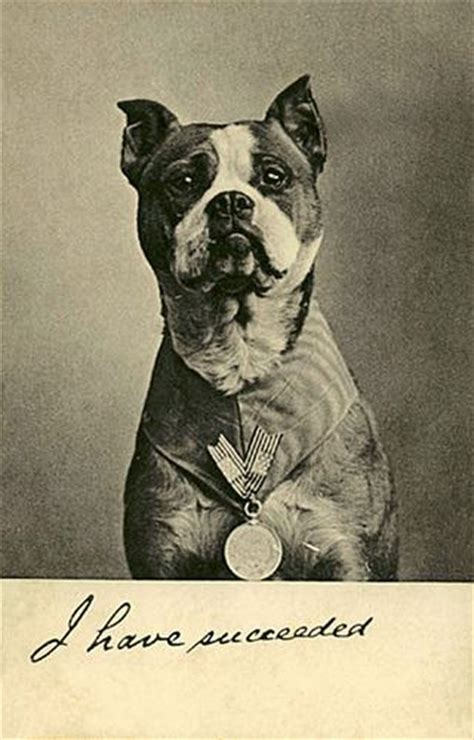 Sergeant Stubby Pitbull Dogs Not And Vomiting History Of Pit Bulls In War Houston Heights