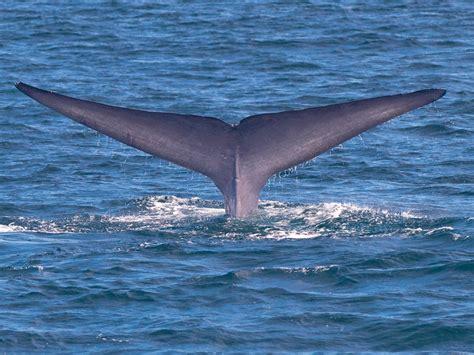 Hem Whale whale santa barbara santa barbara nu
