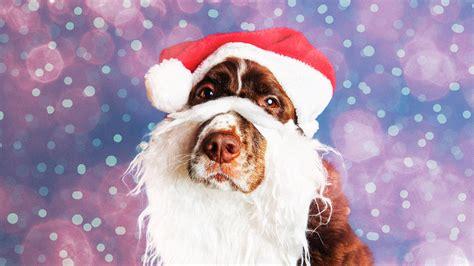 dogs cats rabbits   pig dressed  santa claus riot fest