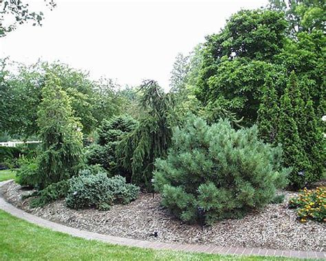 84 best conifers images on pinterest landscaping ideas diy landscaping ideas and evergreen garden