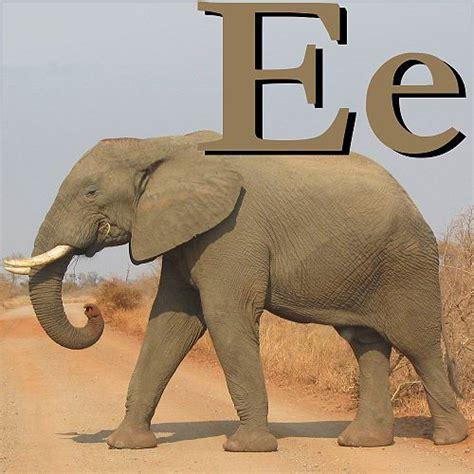wikijunior animal alphabet u wikibooks open books for wikijunior animal alphabet e wikibooks open books for