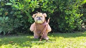 Cute Halloween Costumes Puppies Munchkin Teddy Bear Ewok