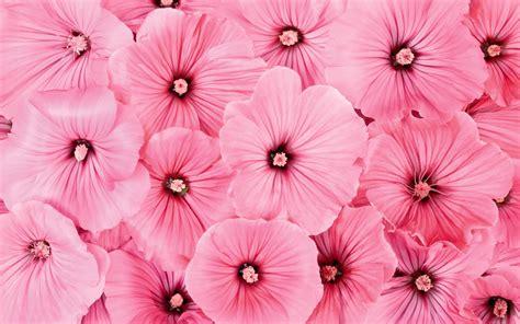 Flowers Pink pink flowers wallpaper 2560x1600 51768