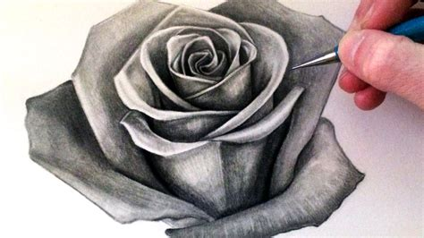 Drawing Roses by Draw A Pencil And In Color Draw A
