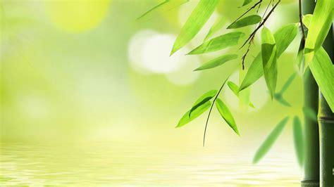 Wallpaper Sticker Stiker Wps311 Soft Green N Big Flower Cantik Murah Hq Definition Wallpapers Bamboo For Pc 26