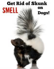 how to remove the skunk smell from dogs jongose ninja