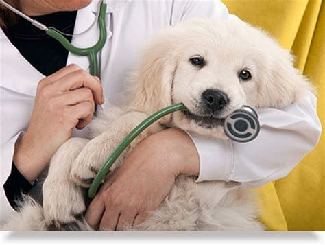 dogs in care vet surgical clinic excellent pet surgery from vets wellington