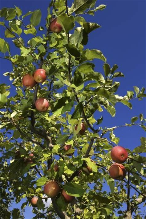 organic pesticide for fruit trees - Pesticides For Fruit Trees