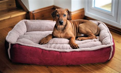 dog on bed dog bed furniturerepairman com