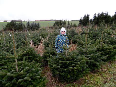 den eigenen weihnachtsbaum selber schlagen ein erlebnis