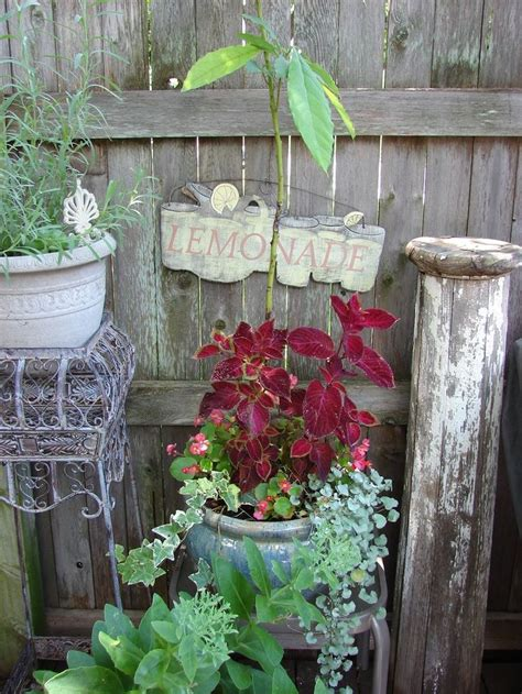 Shabby Chic Garden Decor 23 Best Shabby Chic Gardens Images On Pinterest Shabby Chic Garden Decor And Design And