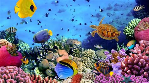 wallpaper colorful fish and interactive water ocean fish live wallpaper android apps on google play