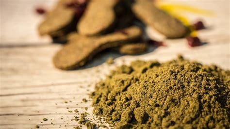 canapé sits biscotti di canapa cannabis legali e gustosi mondo