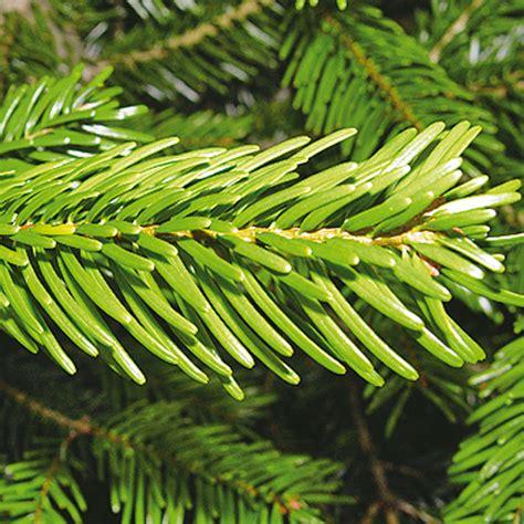 best 28 wann weihnachtsbaum kaufen der weihnachtsbaum