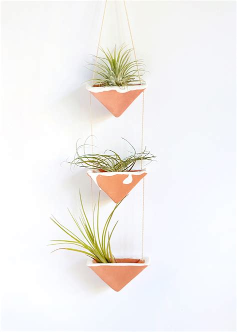 air plant wall holder how to care for the lovely air plants that adorn your home