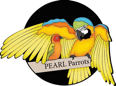 bird rescue pennsylvania pearl parrot rescue pittsburgh