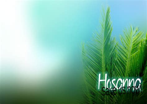 themes powerpoint d p happy palm sunday 2018 whatsapp status dp fb profile cover