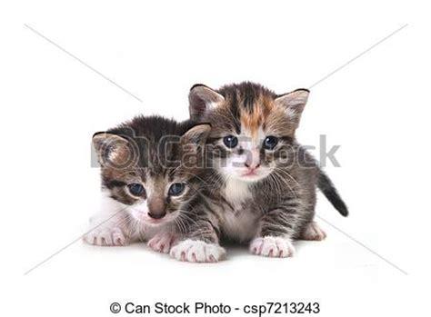 Stock Foto's van schattig, pasgeboren, baby, Katjes