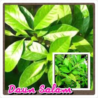 Obat Asam Lambung Jitu khasiat daun salam sebagai obat asam urat herbal yang jitu