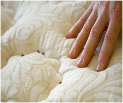 how to get rid of bed bugs how to get rid of bed bugs at home