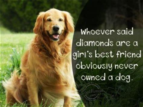 pets best friend best friend quotes quotesgram