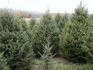 Christmas Tree Shop Md - pleasant valley tree farm