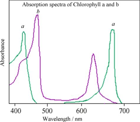 what color is chlorophyll chlorophyll wavelength absorption