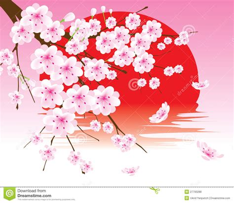 vector cherry blossom branch on the red sun royalty free