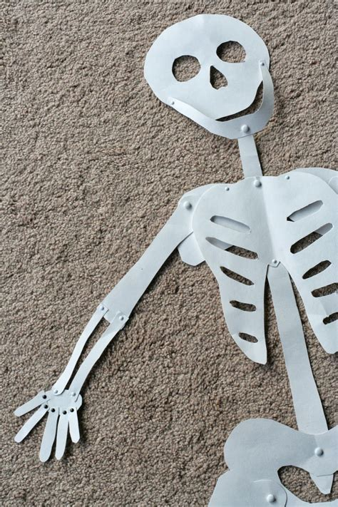 How To Make A 3d Human Out Of Paper - kid sized skeleton pictures photos and images for
