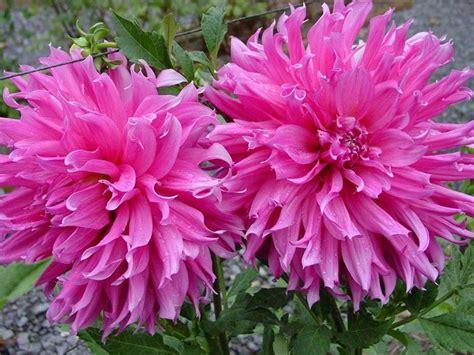 piante da fiore da appartamento pianta da interno piante da interno pianta da appartamento