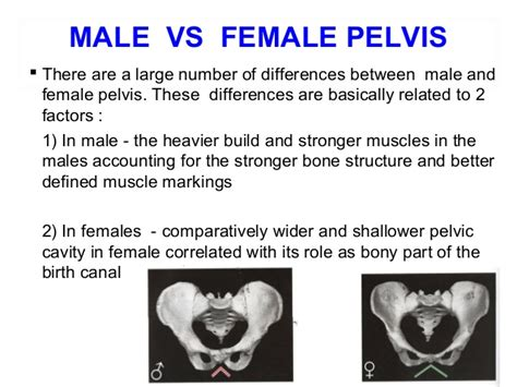 is there difference in pubic hair shape in men and women is there adifference between and pubic hair male genital