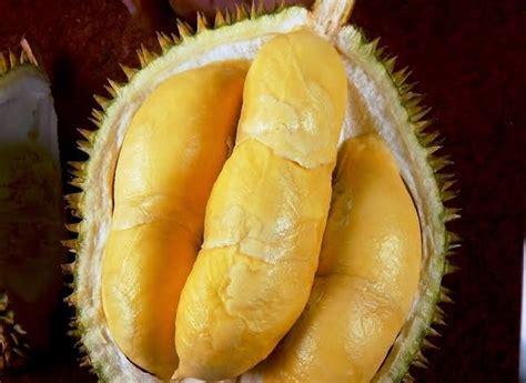 eksplorasi  rekomendasi buah durian  nikmat