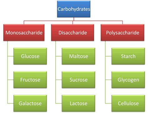 carbohydrates definition and importance spm biology carbohydrates