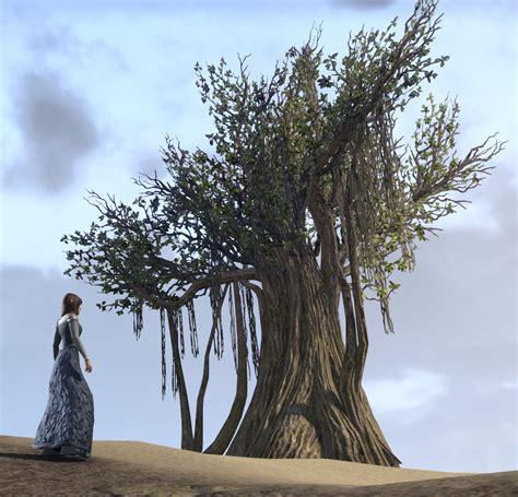 eso fashion tree ancient banyan elder scrolls